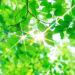自然療法に関する カウンセリング